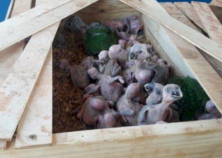 PMA flagra traficante com 150 papagaios e aplica multa de R$ 750 mil