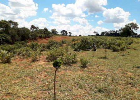 Fazendeiro é multado em R$ 16 mil por desmatar vegetação nativa em Nova Alvorada do Sul