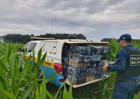 Caarapó: Polícia encontra 600 kg de maconha em plantação de milho