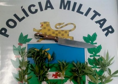 Ivinhema: Mãe e filho são presos após PM flagrar plantação de maconha em residência