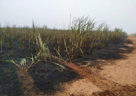 Usina de Ivinhema é multada em R$ 189 mil por incêndio em lavoura de cana e matas protegidas