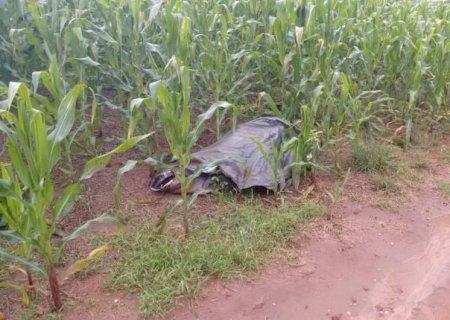 Homem é encontrado morto em plantação ao lado de espingarda e com moto sobre as pernas