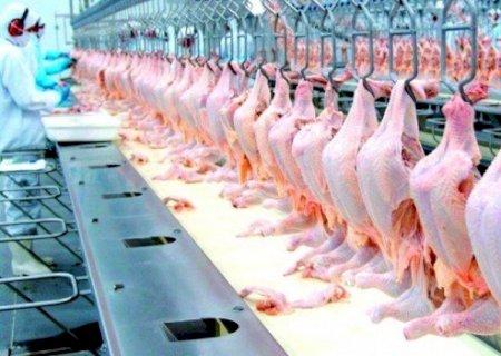 Chineses detectam coronavírus em frango importado do Brasil