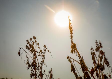 Umidade vai a 14% em Amambai; 8 locais de MS estão entre mais secos do País