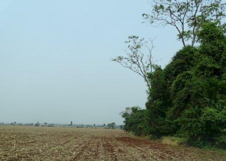 Plantio da soja começa tímido por falta de chuva, mas expectativa é de produção recorde