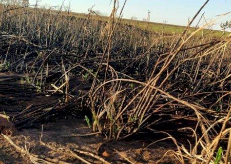 JATEÍ: PMA autua empresa sucroenergética em R$ 660 mil por incêndio em lavoura de cana