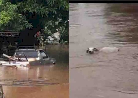 Chuva faz rio transbordar e água cobre casas, carros e leva vaca em cidade de MS