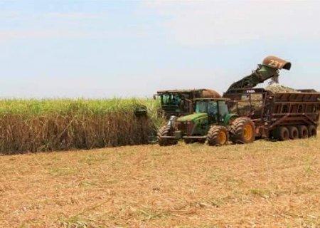 Cresce exportação de açúcar e MS fatura US$ 303 milhões