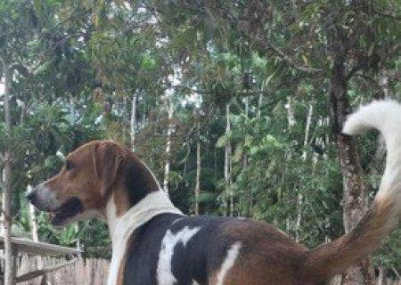 Vizinho dá paulada em cachorro que tem perna fraturada em cidade de MS
