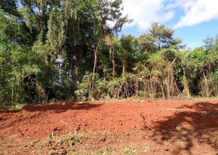 PMA autua fazendeiro em R$ 7 mil por derrubar árvores em área de preservação em Ivinhema