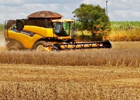 Com ajustes, Safra da soja deve ultrapassar 11,2 milhões de toneladas
