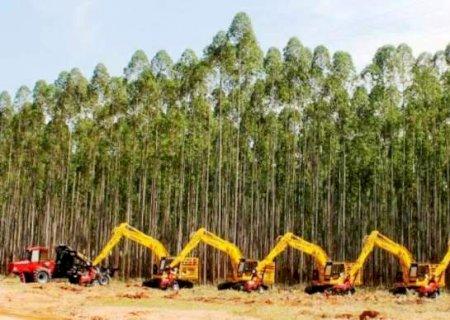 Mesmo com 'boom' no plantio, escassez de madeira ameaça produção de MS