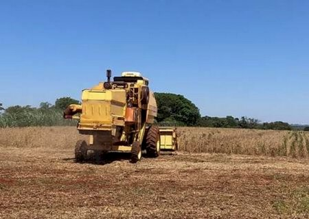 Assentamento Itamarati colhe cultivar de soja orgânica da Embrapa