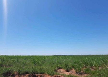 Por satélite, polícia descobre cana em área que deveria ser de floresta