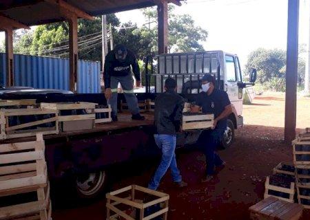 Dourados distribui 1,5 mil mudas de maracujá e espera safra de 30 toneladas