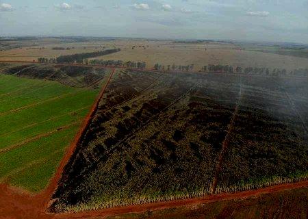 Lixão pega fogo e chamas atingem plantação de cana em Nova Andradina