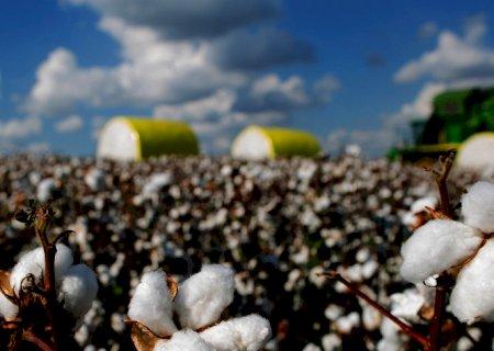 Maio bate recorde nas exportações brasileiras de algodão
