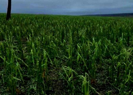 Após estiagem e granizo, produtores avaliam desistir de colher milho, aponta Siga-MS