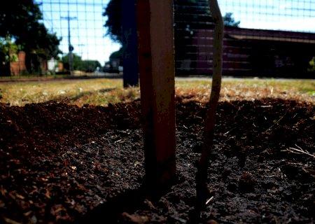 Prefeitura realiza o plantio de 1 mil mudas de árvores nativas no Dia Mundial da Juventude em Dourados