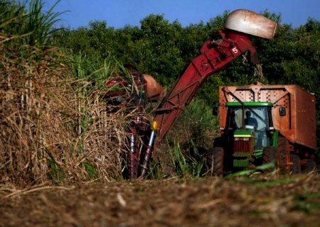 Seca gera quebra de 18% na safra de cana-de-açúcar e afeta plantio