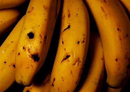 Brasil é o quarto maior produtor de bananas do mundo