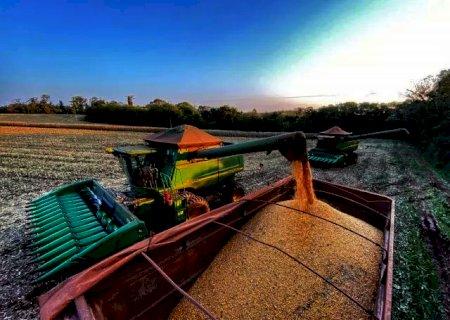 Praticamente encerrada a colheita da safrinha em MT