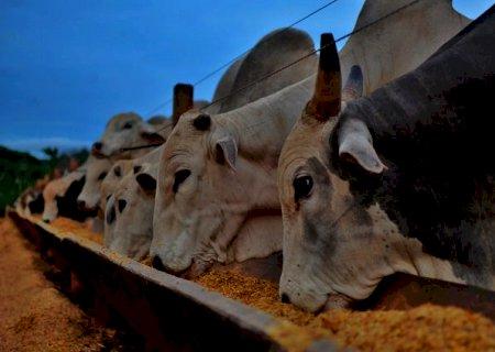 Brasil sem milho? Governo vai zerar taxa de importação