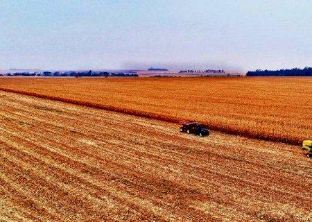 Produtores aceleram colheita do milho para garantir seguro