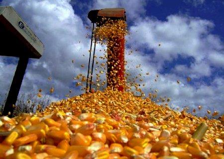 Colheita do milho está praticamente finalizada no Sul do Estado e atinge 1,9 mi de hectares