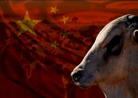 China liberou exportações de carne, verdade ou mito?