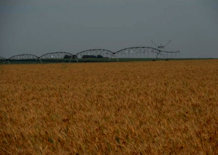 País deve importar 5 milhões de toneladas de trigo