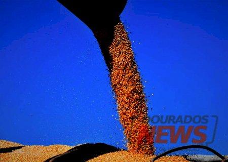 Com colheita perto do fim, MS já vendeu 68% da safra de milho